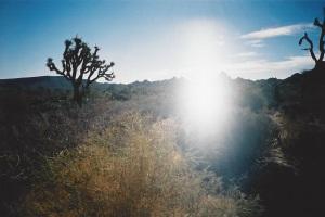 Desert Ghost