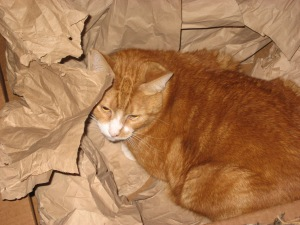 Cat Christmas 009